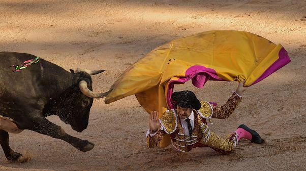 Nach Corrida-Aus: Spaniens Stierzüchter bitten um Hilfe