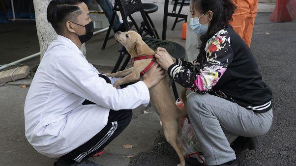Koronavirüsün çıkış noktası olan Çin'in Vuhan kenti