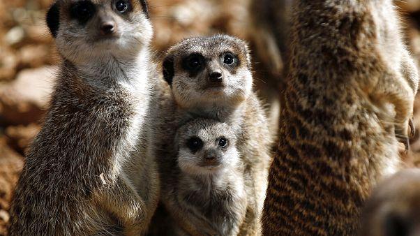 Γεννητούρια στο Αττικό Ζωολογικό Πάρκο εν μέσω καραντίνας