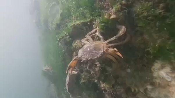 Visszatért az élet a velencei lagúnákba
