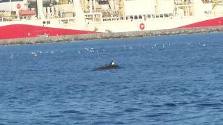 Viel mehr Spielraum: Delfin-Vergnügen im Bosporus