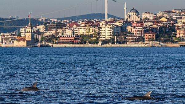صور: الدلافين تغزو البوسفور مستغلة الصمت المخيّم على إسطنبول