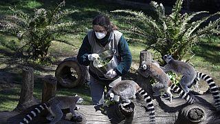 Bald Notschlachtungen? Zoos nagen am Hungertuch