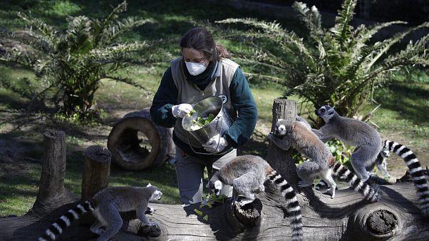 Животным в европейских зоопарках грозит смерть
