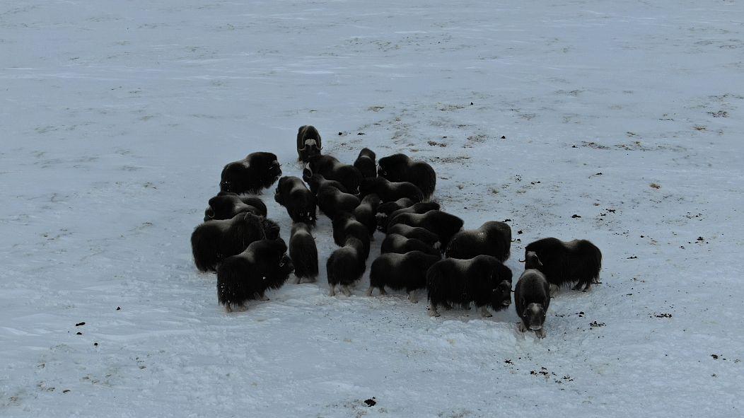 Wrangel Island Nature Reserve / WWF-Russia