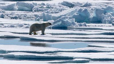 Drones help monitor the birthplace of polar bears in Arctic Russia