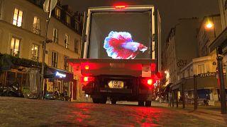 شاهد: صور مجسمة ثلاثية الأبعاد للحيوانات تضيء شوارع باريس أثناء الإغلاق