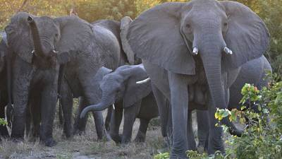 Wildlife in South Africa needs protection more than ever before