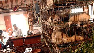 صورة من الأرشيف من سوق للحيوانات البرية في غوانزو جنوب الصين (2004)
