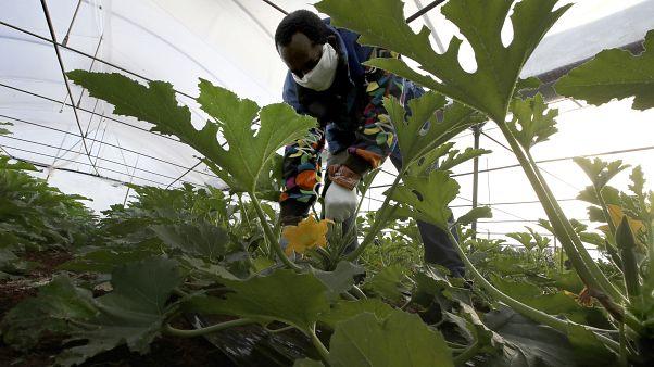 Ιταλία: Σχέδιο νομιμοποίησης χιλιάδων παράνομων μεταναστών