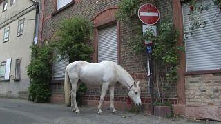 Jenny, a ló, aki karantén idején is szabadon sétálhat