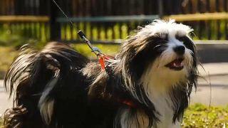 """""""Счастье с доставкой на дом"""": животных забирают из приюта"""