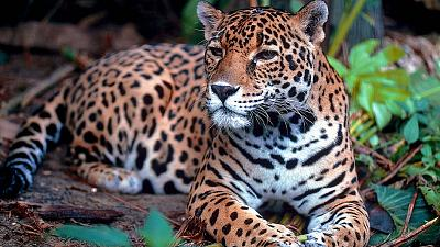 Wildlife is roaming the Mayan forests