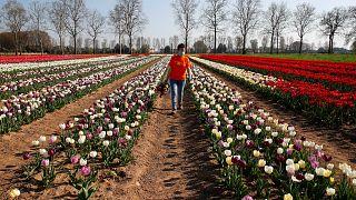 İtalya çiftliklerde istihdam edilmek üzere 200 bin göçmene çalışma izni verecek