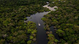 عابة الأمازون