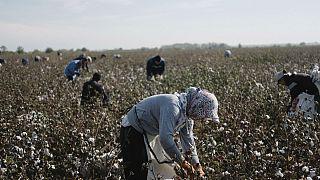 ازبکستان؛ ۵۰ هزار فرد بدون تابعیت می توانند درخواست شهروندی کنند