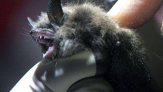 No Bats