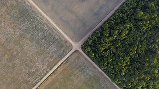 Rekordokat dönt az erdőirtás mértéke Amazóniában a koronavírus-járvány közepette