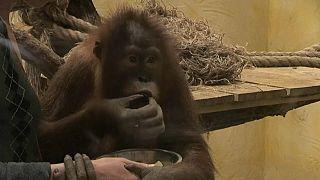 Зоопарки в карантине: животным приходится менять рацион