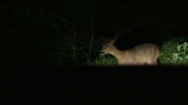 Lockdown: Das Paradies für Wildtiere