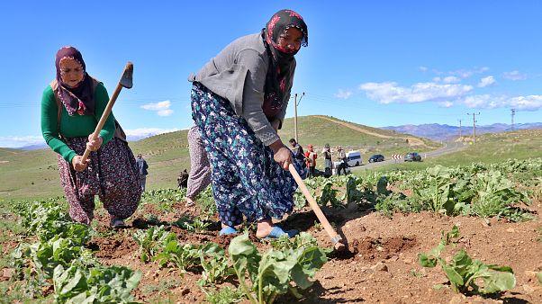 Elazığ'da Tarım İl Müdürlüğü, tarlada çapa yapan işçi annelere karanfil verdi.
