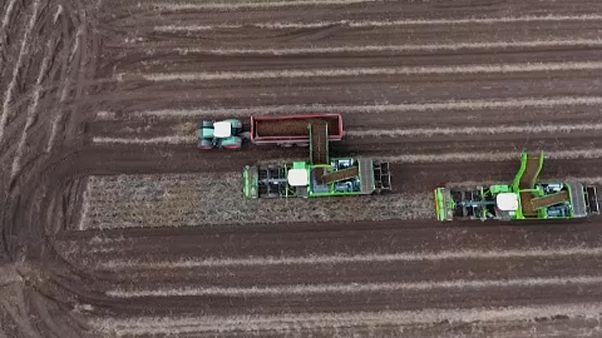 EU: a vírus után jöhet az agrárreform