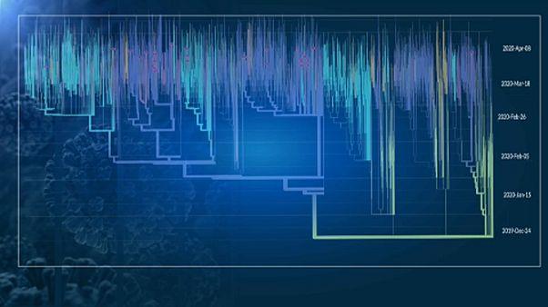 A Szentágothai János Kutatóközpont által készített filogenetikai ábra
