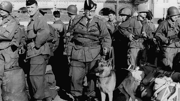 The 7th Mechanized Division from Germany arrive in Algiers March 30, 1956 with their pet, a huge Alsatian. (AP Photo)