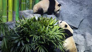 Canada Panda Passage