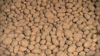 Коронавирус: картошка гниёт, пиво киснет