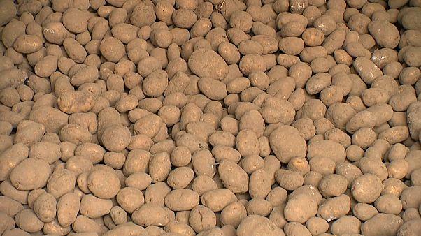 Γαλλία: Σε απόγνωση οι παραγωγοί πατάτας και μπίρας