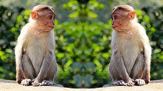 Anche questi animali praticano il distanziamento sociale per evitare il contagio