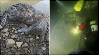 صور من مقطع الفيديو :حطام ناقلة النفط تحت الماء وطير على الشاطئ فقد القدرة على الحرطة بسبب تلوث المياه