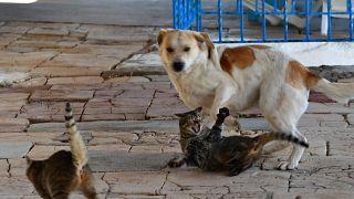 Ενας σκύλος και τρεις γάτες μολύνθηκαν με Covid-19 από τους ιδιοκτήτες τους
