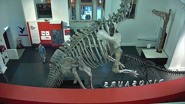 أحد الأشخاص يتسلل إلى متحف مقفل في سيدني بأستراليا ويأخذ صورة سيلفي مع ديناصور