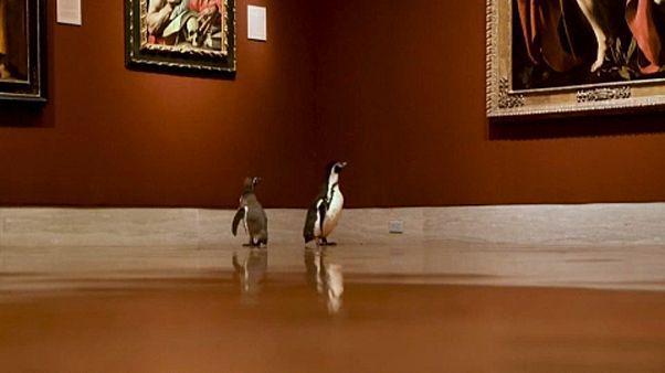 ویدئو؛ سه پنگوئن در غیاب آدمها از موزه معروف نلسون اتکینز دیدن کردند