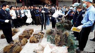 Çin'in Guangzhou kentindeki vahşi hayvan pazarına düzenlenen baskında toplanan misk kedileri (arşiv)