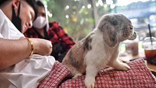 Tavşan kafe (Arşiv)