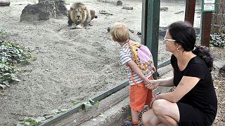Látogatók az oroszlánok kifutójánál a Fővárosi Állat- és Növénykertben 2020. május 20-án