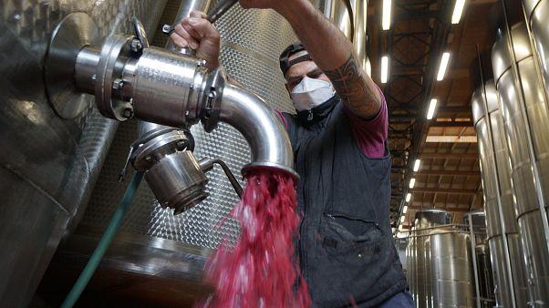 Lambrusco wine at a winery near Reggio Emilia, central Italy.