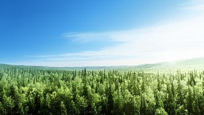 The EU will plant 3bn trees to help protect biodiversity.
