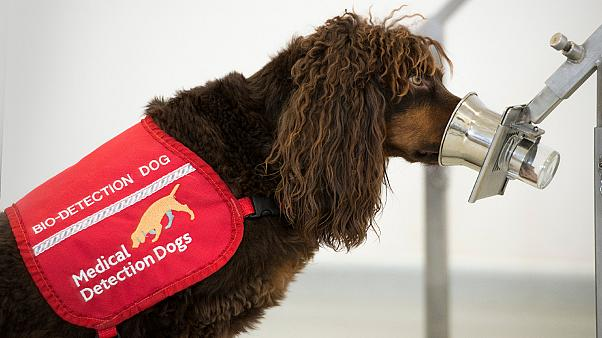 Release the hounds: UK deploys dogs to sniff out coronavirus