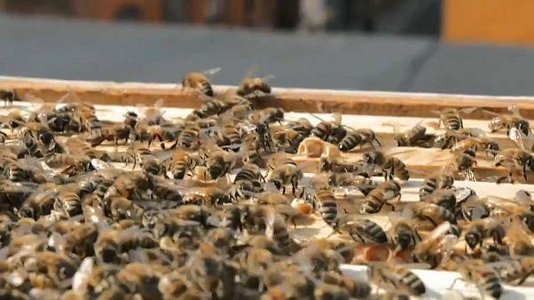 """Zum Tag der Artenvielfalt: EU bleibt bei """"Grünem Deal"""" - trotz Covid-19"""