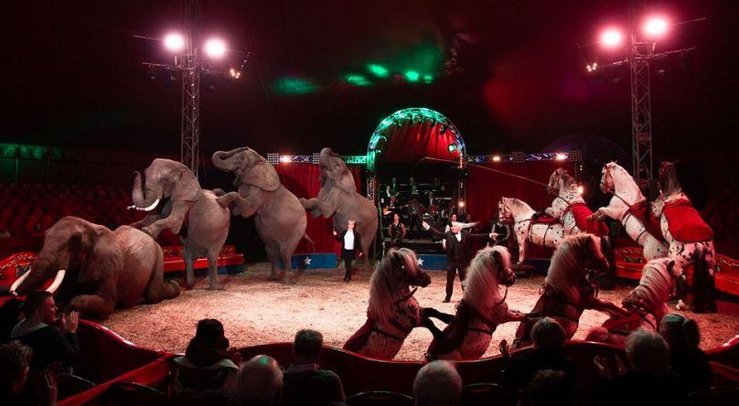 Magyar Nemzeti Cirkusz Hivatalos Oldala - Hungarian National Circus / Facebook