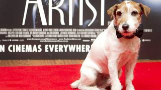 Uggie at a special screening at a London cinema, 2012.
