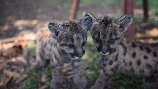 شاهد: في المكسيك.. الوباء والحجر الصحي يبصرون الحياة في حديقة للحيوانات