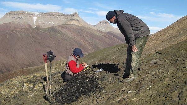 Il professor John Marshall, il principale ricercatore dello studio, raccoglie campioni a Spitsbergen - Copyright Sarah Wallace-Johnson