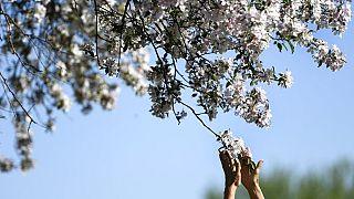 Floransa Belediyesi, Covid-19 nedeniyle hayatını kaybeden 172 kişi için birer ağaç dikerek anı ormanı oluşturacak.