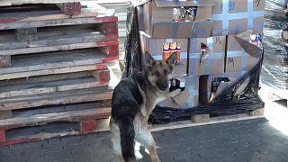 Служебная собака нашла контрбанду