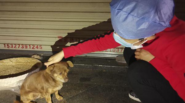 ممرضة صينية مع أحد الكلاب